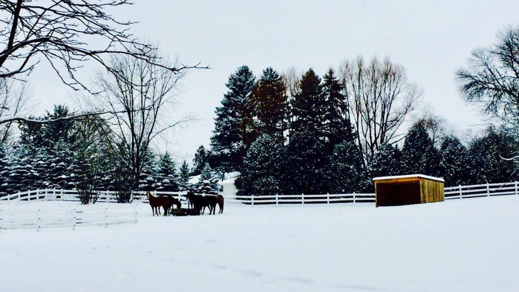 HGR Winter Snow