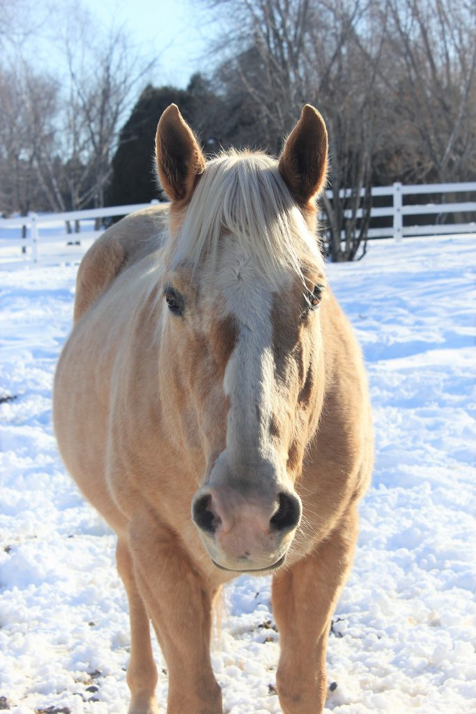 Windy 2019 Equine of the Year